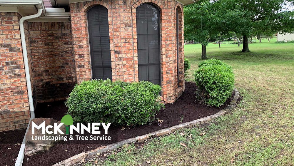 Gallery - Weeding & Mulch: Front Shrubs Sideview
