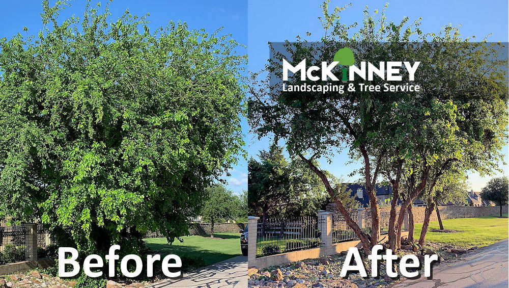 Gallery - Tree Trimming: Before and After 2